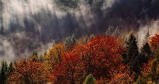 10 Autumn Things To Do in the Black Forest